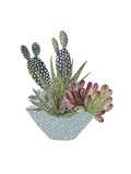 Cactus Arrangement I Premium Giclee Print by Melissa Wang