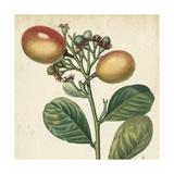 Garden Bounty I Prints by Vision Studio