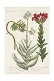 Botanical Varieties I Prints by  Weinmann
