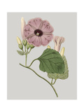 Floral Gems IV Premium Giclee Print by Vision Studio