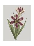 Floral Gems III Premium Giclee Print by Vision Studio