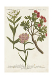 Botanical Varieties IV Prints by  Weinmann