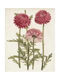 Vintage Garden Beauties I Premium Giclee Print by Horto Van Houtteano