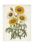 Vintage Garden Beauties III Premium Giclee Print by Horto Van Houtteano