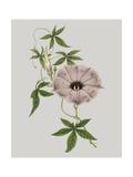 Floral Gems VI Premium Giclee Print by Vision Studio