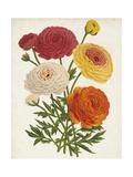 Vintage Garden Beauties II Premium Giclee Print by Horto Van Houtteano