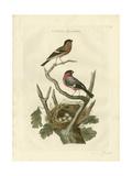 Nozeman Birds & Nests  I Prints by  Nozeman