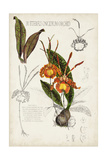 Orchid Field Notes IV Arte por Naomi McCavitt