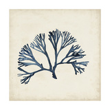 Seaweed Specimens XI Prints by Naomi McCavitt
