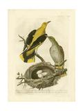 Nozeman Birds & Nests  II Poster by  Nozeman