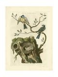 Nozeman Birds & Nests  III Posters by  Nozeman