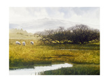 Grazing Sheep Giclee Print by Miguel Dominguez