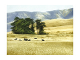 Summer Rest Giclee Print by Miguel Dominguez