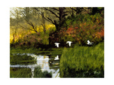 Three Egrets Giclee Print by Miguel Dominguez