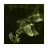 Bird Study 1 Giclee Print by Adam Horton