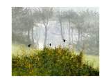 Redwings in the Mist Giclee Print by Miguel Dominguez
