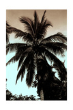 Sepia Palm 4 Recolor Giclee Print by  Porter Design