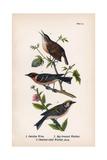 Vintage Birds: Wrens and Warblers, Plate 73 Poster par  Piddix