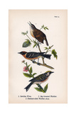 Vintage Birds: Wrens and Warblers, Plate 73 Poster by  Piddix