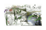 A Drawing of the Wildflowers of an American Eastern Wetland Giclee Print by Jack Unruh