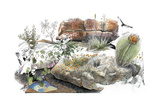 A Watercolor and Ink Drawing Shows the Wildflowers of the Southwest Giclee Print by Jack Unruh