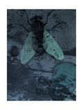 Fly on Wall Prints by Alan Baker