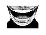 Toothy Smile Print by David Chestnutt