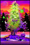 Weed Gnomes Poster