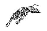 Tiger Attacking Prints by David Chestnutt