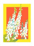 Close Up of Bell Flowers on Colored Background Prints by David Chestnutt