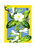 White Apple Blossoms Prints by David Chestnutt