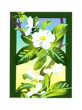 White Apple Blossoms Affiches par David Chestnutt