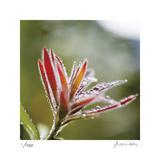 Botanical 2 Limitierte Auflage von Florence Delva