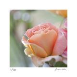 Roses 2 Limitierte Auflage von Florence Delva