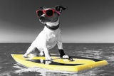 Pop of Color Surf's Up Dog Art by  Color Me Happy