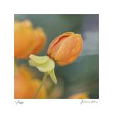Summer Bloom 2 Limitierte Auflage von Florence Delva