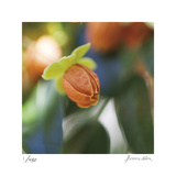 Summer Bloom 1 Særudgave af Florence Delva