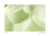 Ginko 3 Limitierte Auflage von Florence Delva