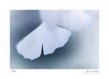 Ginko 4 Særudgave af Florence Delva