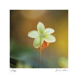 Summer Bloom 3 Limitierte Auflage von Florence Delva