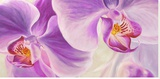 Purple Orchids Stretched Canvas Print by Cynthia Ann