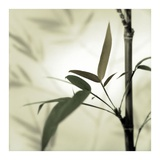 Bamboo 1 Prints by Alan Blaustein