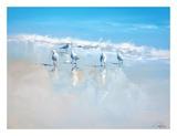 Les goélands de Sorrento (Poster, Art, Marine, Oiseaux, Plage, Italie, Mer, Bleu) Affiches par Craig Trewin Penny