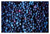 Blueberries II Art by Peter Morneau