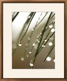 Rain Drops on Pine Branch Needles Framed Photographic Print by Ellen Kamp