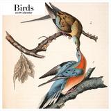 Birds 2018 Square Calendar Calendars