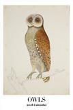 The Art of Owls - 2018 Calendar Calendars