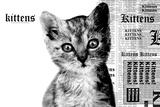 Reputation parody (kat med teksten 'kittens' i forskellige typografier) Plakater
