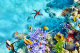Wonderful and Beautiful Underwater World with Corals and Tropical Fish. Photographic Print by Brian Kinney
