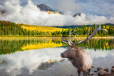 Jasper National Park in the Rocky Mountains of Canada. Proud Deer Antlered Stands on the Banks of T Photographic Print by  kavram